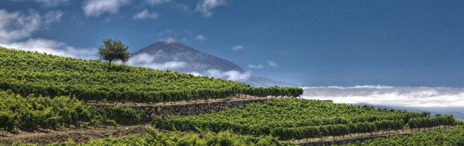 Monje Winery